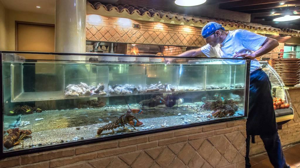 Hotel-La-Giocca-Roma-Pappa-Reale-aquarium